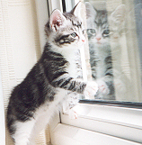 Kitten in the Window
